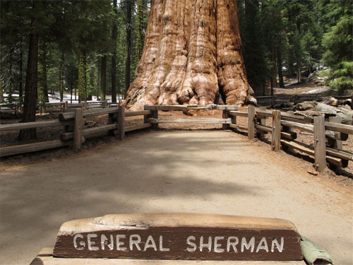 General-Sherman-of-Sequoia-National-Park