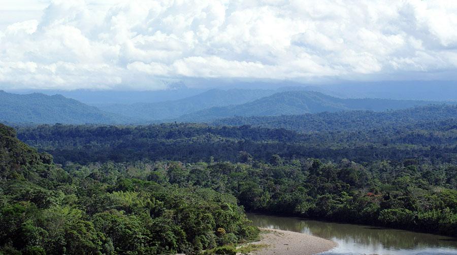 Amazon rain forest,