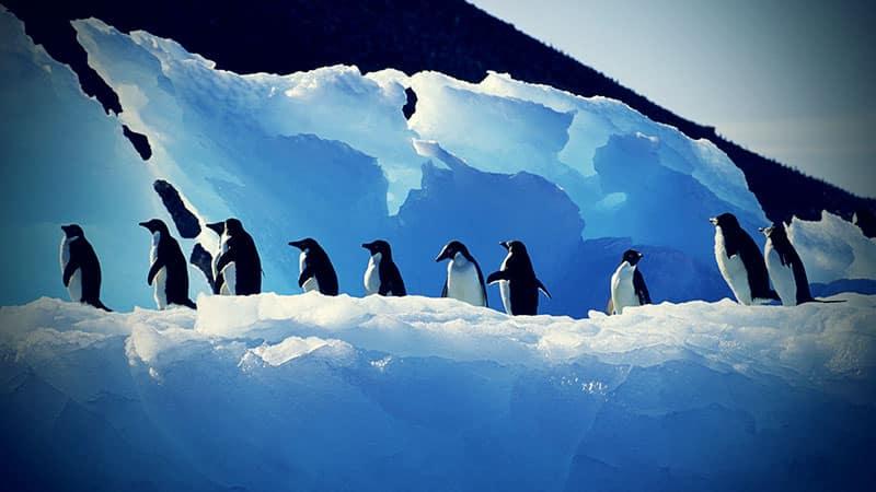 Penguin - Adorable, but not an ideal workforce.