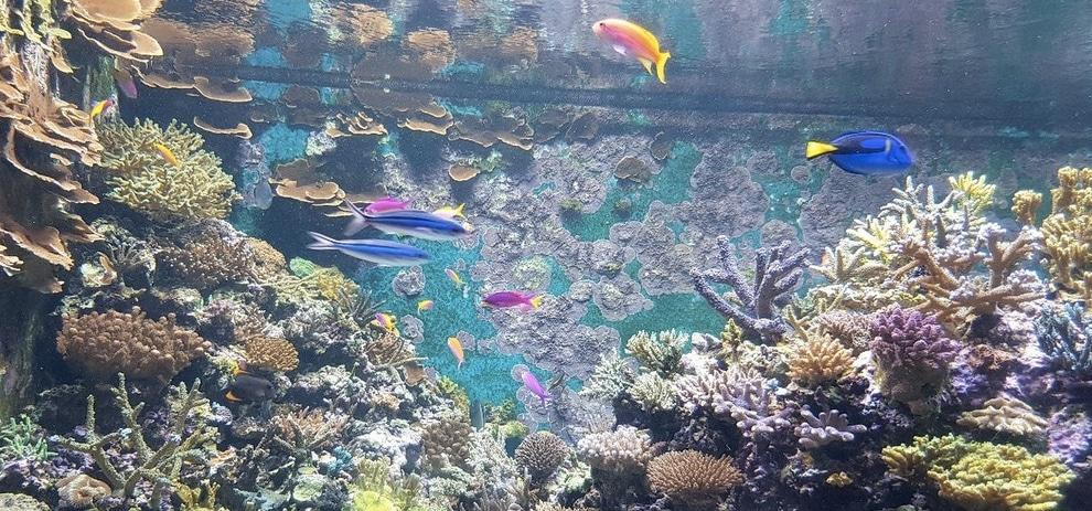 SEA Aquarium (Sentosa Island) Singapore
