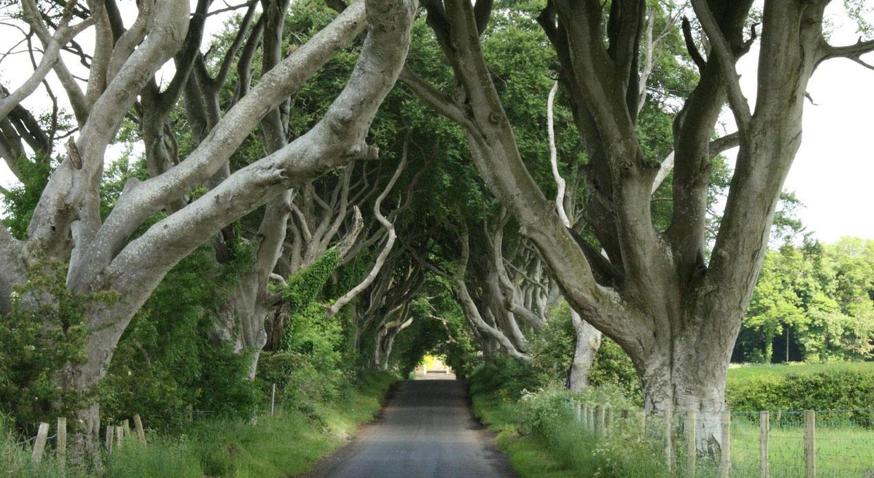 The Dark Hedges (Ballymoney), Northern Ireland, United Kingdom