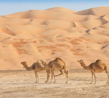 The Arabian Desert, Dubai (United Arab Emirates)