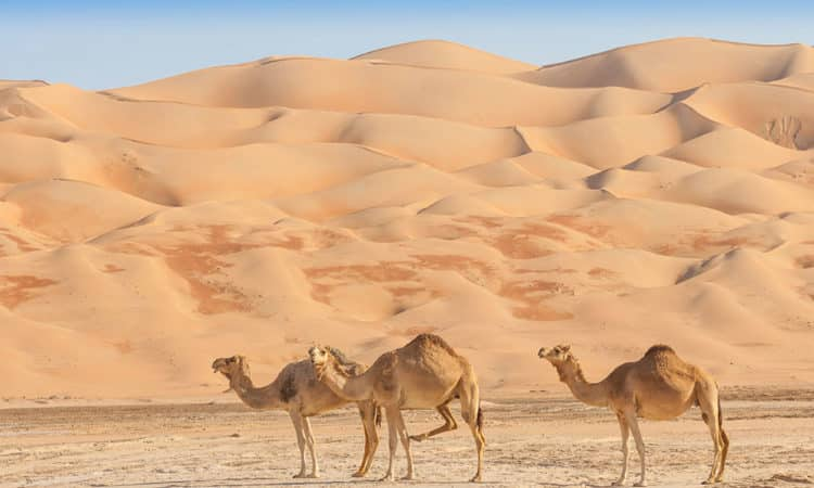 The Arabian Desert, Dubai (United Arab Emirates)