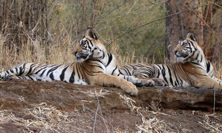 Bandhavgarh National Park, India