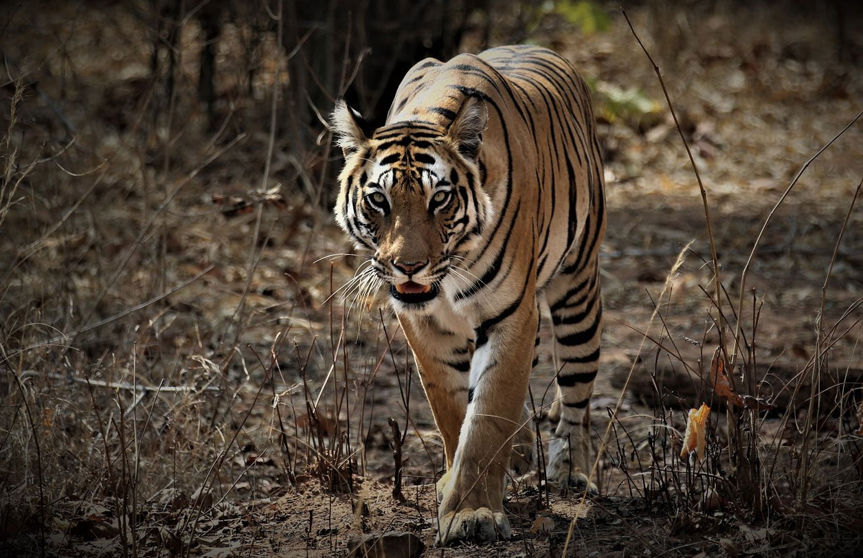 Kanha National Park, India