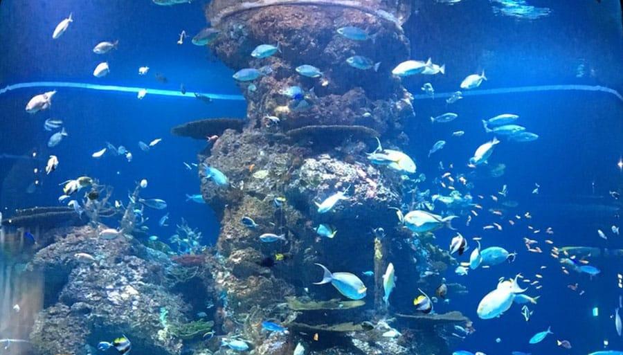 SEA Aquarium (Sentosa Island), Singapore