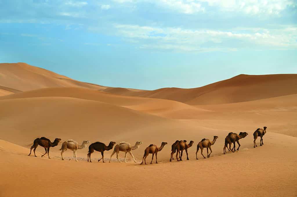 The Thar Desert, Jaisalmer (India)