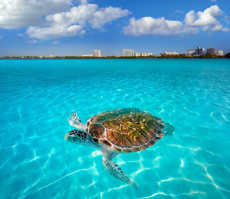 Nichupte lagoon Cancun in Mexico